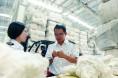 中国棉花公证检验乌苏实验室迎来首批样品
