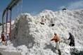 棉花市场怎么了?看看大佬们怎么说(之四)