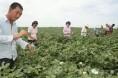 化肥价格上涨将结束近两年农业生产成本相对平稳态势