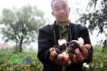 新疆:贸易商坚持挺价 受灾程度加剧