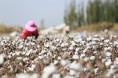 新华社:助力棉花目标价格改革 涉棉期货加快创新发展