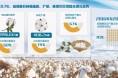 """产量占全国比重连续两年超过70% 新疆棉花生产""""一枝独秀"""""""
